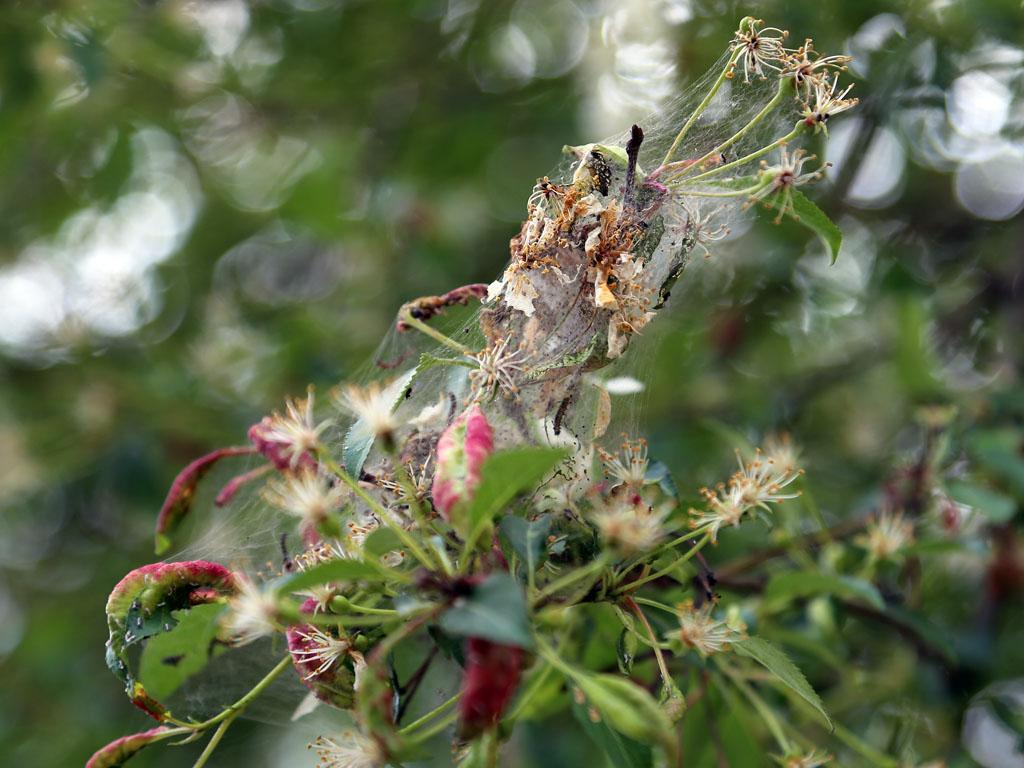 Как избавиться от моли на садовом участке: описание, виды, какие растения поражает, методы профилактики и способы борьбы - биологические препараты, инсектициды, лампы, народные средства, плюсы и минусы перечисленного