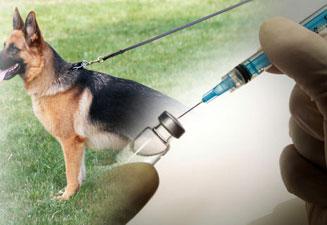 Прививка от клещей собакам