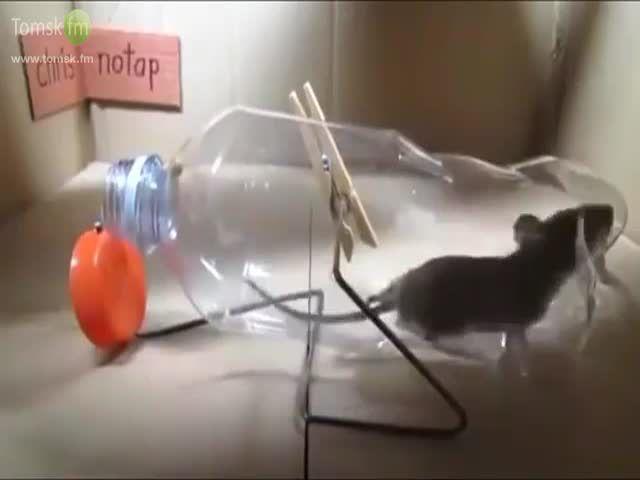 Как поймать мышь в домашних условиях - эффективные способы