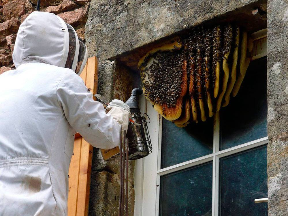 Уничтожение насекомых в квартире. домашние насекомые