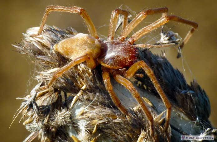 Топ-7 самых опасных пауков в мире: фото, видео, описание