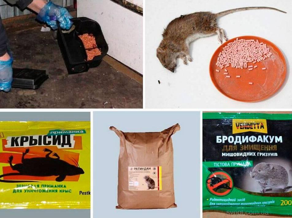 Отравление крысиным ядом человека