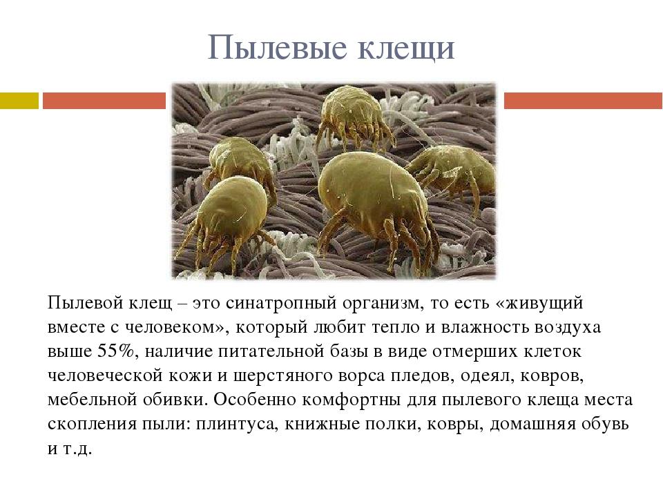 Виды клещей: как выглядят (фото и описание), где обитают, чем опасны для животных и человека, как размножаются, сколько живут, видео