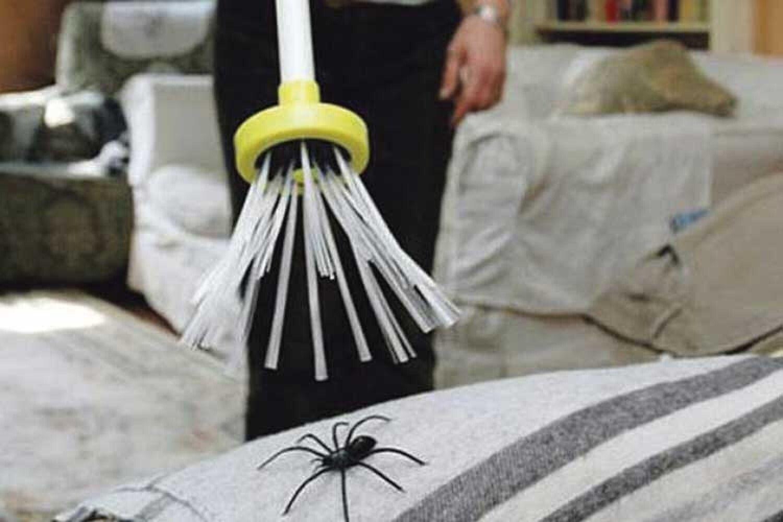 Примета, если паук спускается вниз по паутине с потолка перед лицом