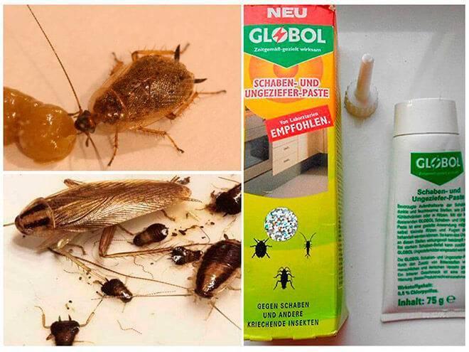 Глобал от тараканов: инструкция по применению