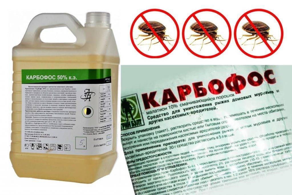 Аверфос от тараканов: отзывы, как использовать