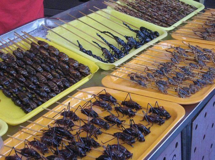 Каких домашних насекомых можно найти в жилье человека: паразиты и вредители