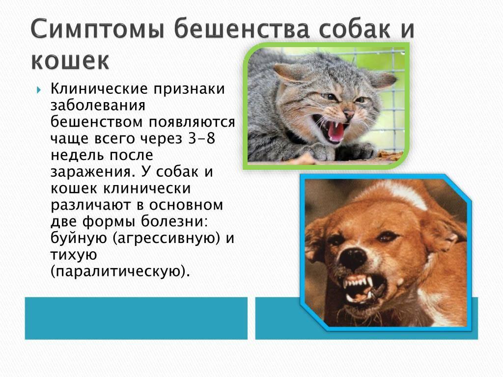 Укусы животных и бешенство