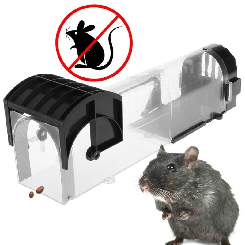 Ловушка для крыс своими руками (видео)