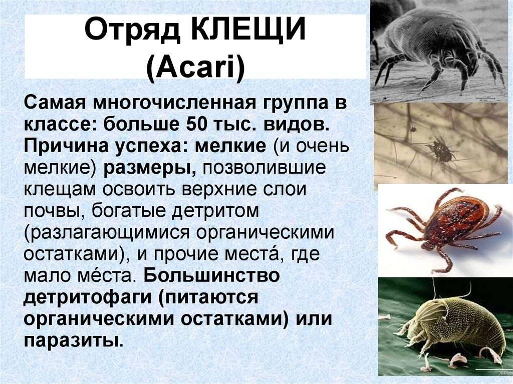 Средство для обработки участка от комаров и клещей