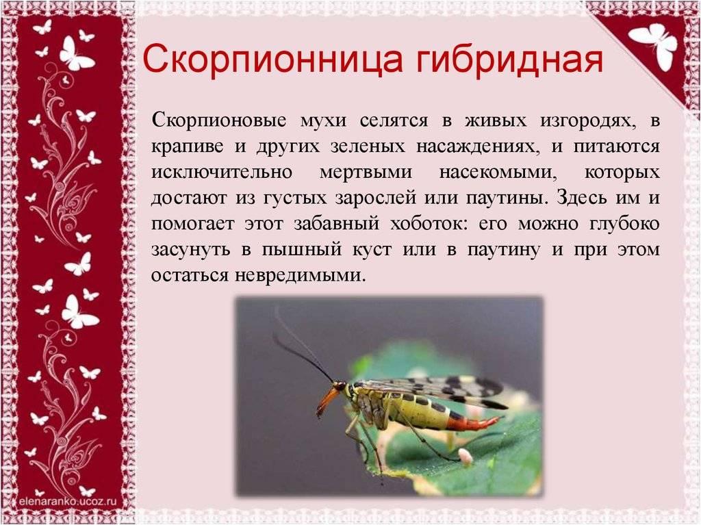 Человеческие имена зодиака скорпион, характеристика и список