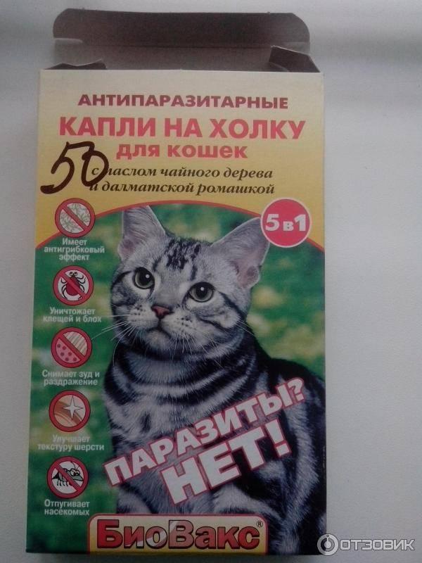 Что будет, если кошка слижет капли от блох: симптомы и лечение отравления инсектицидами