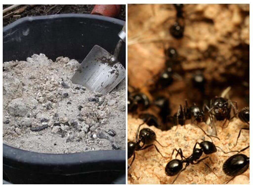 «портят весь вид»: как избавиться от муравьёв на пионах
