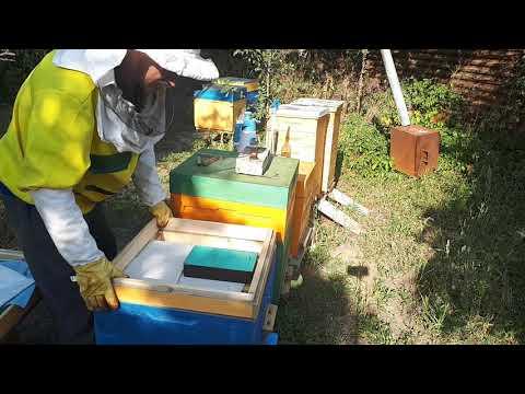 Эффективная защита пчел от клеща