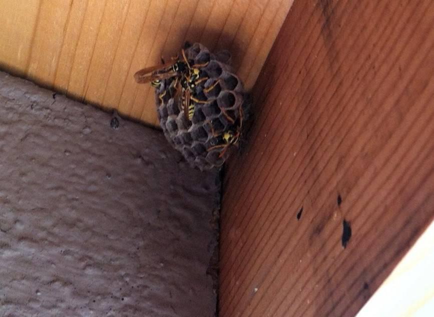 Как избавиться от ос. осиное гнездо на даче