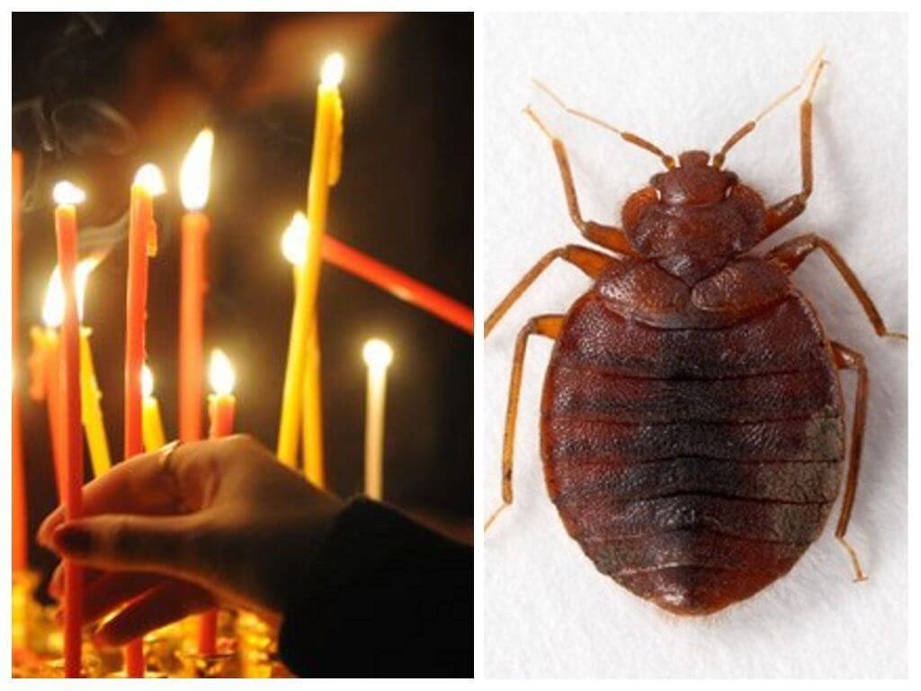 Заговоры против тараканов в квартире