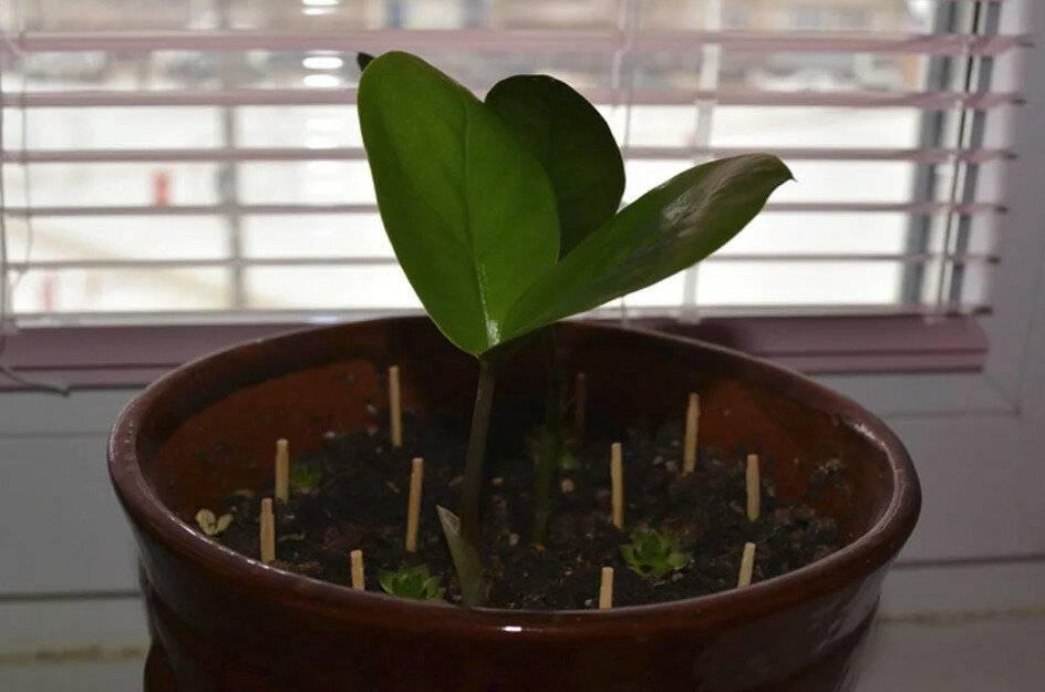 Как избавиться от мошек в цветах комнатных растений в квартире: народными средствами, быстро