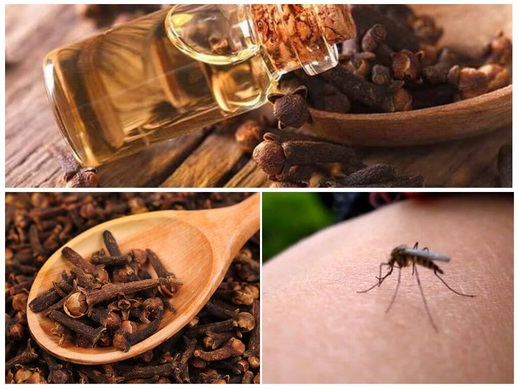 Аромамасла против комаров – эвкалипт, тимьян, гвоздика - что выбрать в борьбе с насекомыми