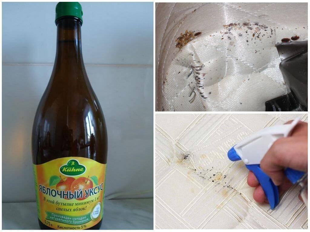 Уксус от клопов – порядок и эффективность применения / как избавится от насекомых в квартире