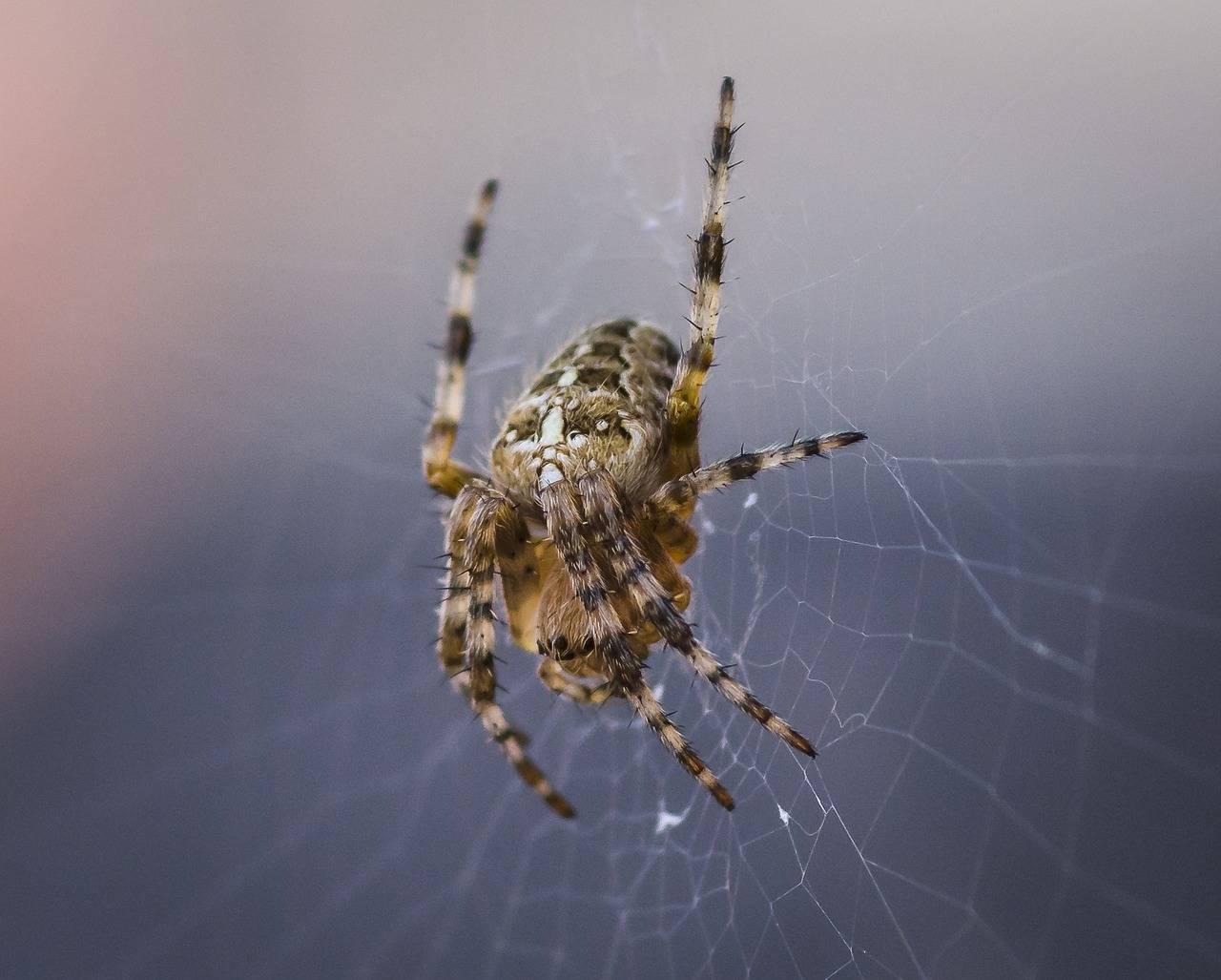Ядовитые пауки россии: фото и названия самых опасных представителей