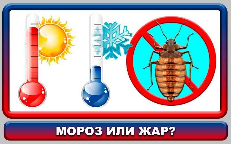 При какой температуре погибают тараканы и их яйца (личинки)?