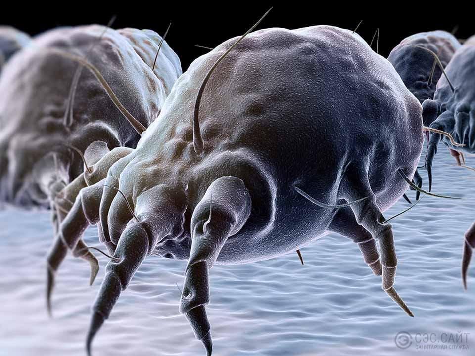 Пылевые клещи в подушках: как избавиться?