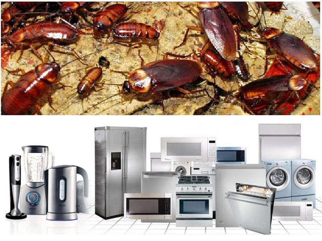 Куда ушли тараканы из наших квартир?