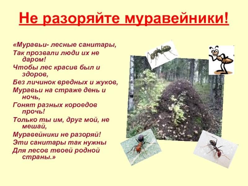 Для чего нужны муравьи в природе