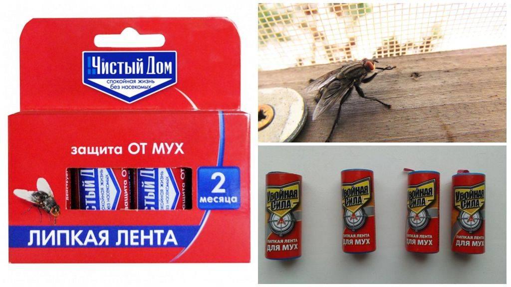 Купить форсайт мухолов, 1 шт липкая лента от мух