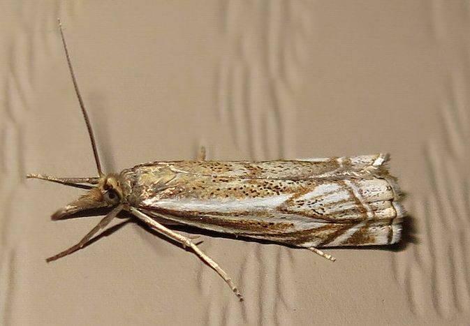 Как избавиться от моли: виды насекомых, народные и химические средства борьбы, избавление от личинок
