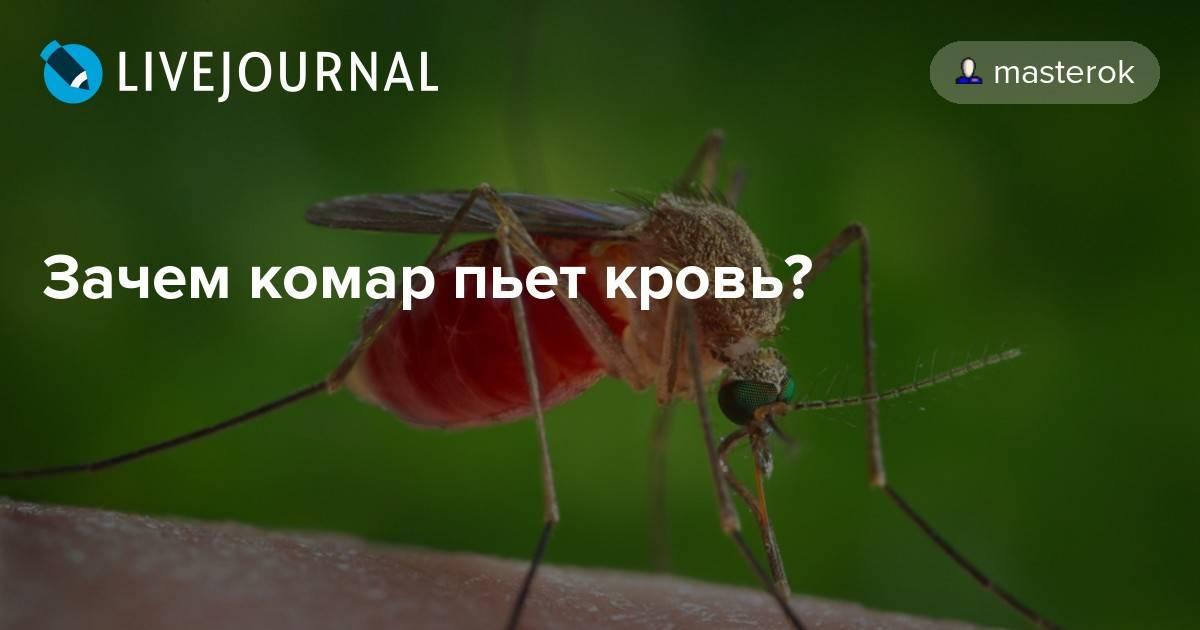 Зачем комары пьют кровь и для чего она им нужна?