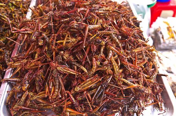 Съедобные насекомые - деликатесы из разных стран