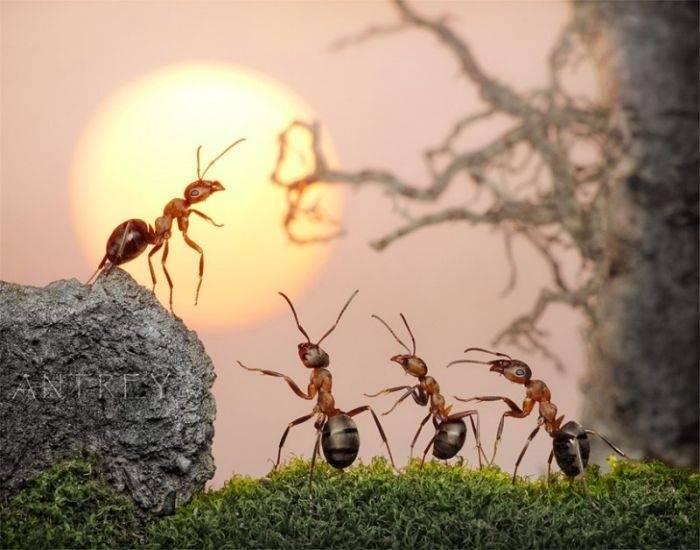 Жизнь муравьев в муравейнике