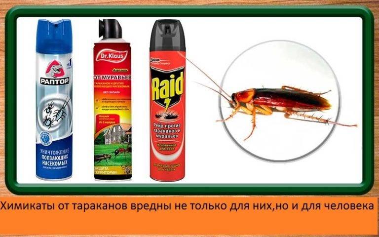Сколько живут тараканы в домашних условиях, без еды воды и при разных температурах