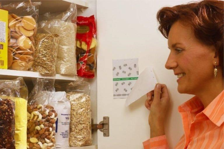Моль в квартире: быстрые и эффективные способы избавления (105 фото)