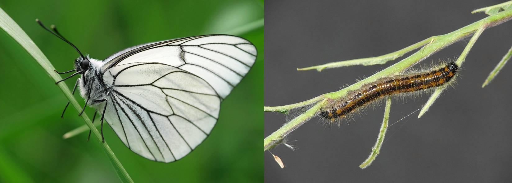 Как избавиться от совки на участке: виды, наносимый вред, обзор лучших способов борьбы с вредителем, их плюсы и минусы