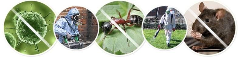 Как убить тараканов и не допустить их возвращения в квартиру?