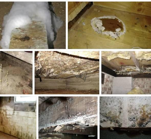 Белая плесень - как избавиться от плесени в погребе или подвале, способы обработки от грибка