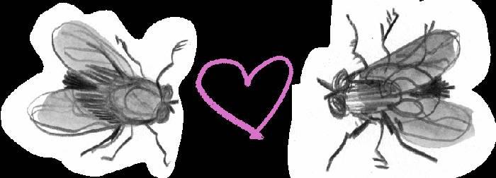 Почему мухи лезут в лицо. почему мухи садятся на человека. причины, по которым мухи садятся на людей