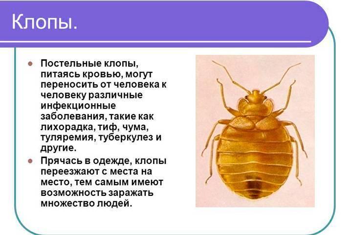 Чем питаются клопы: особенности ротового аппарата, что едят кроме крови, сколько живут без еды русский фермер