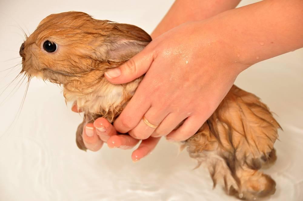 Блохи у кроликов: как вывести?