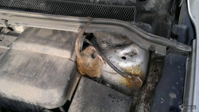 Как избавиться от мышей в машине если они завелись