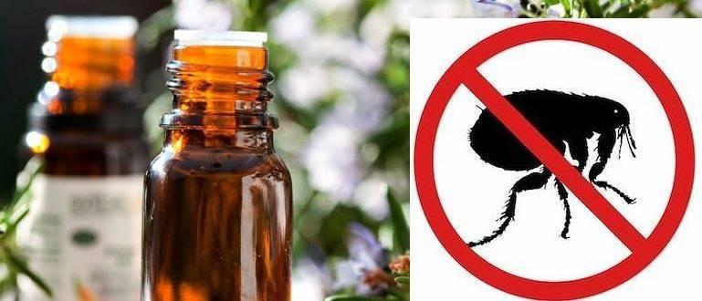 Эфирное масло от блох у кошек и собак