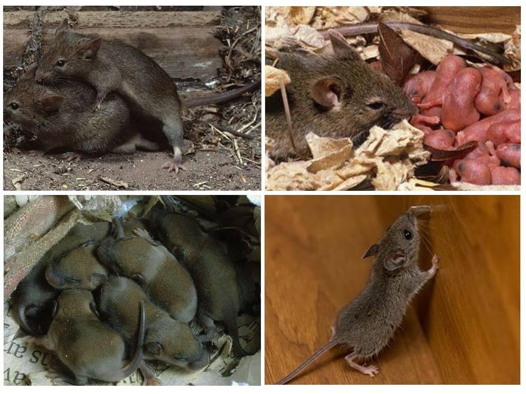 Летучая мышь: все самое интересное - описание, фото, повадки