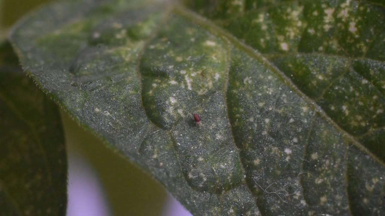 Вредитель паутинный клещ – борьба, виды, препараты