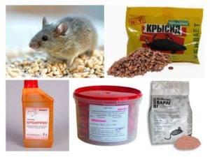 Как действует мумифицирующий яд – особенности отрав против грызунов
