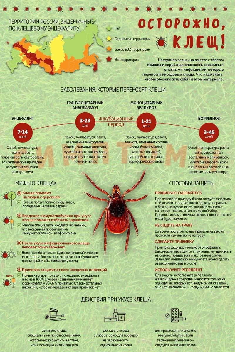 ✅ анализ крови после укуса клеща делается через - денталюкс.su