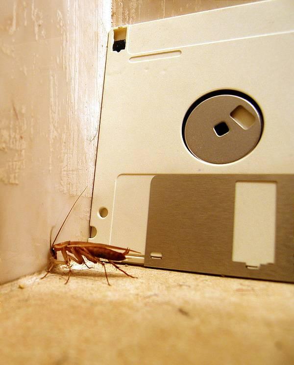 Где живут тараканы в квартире