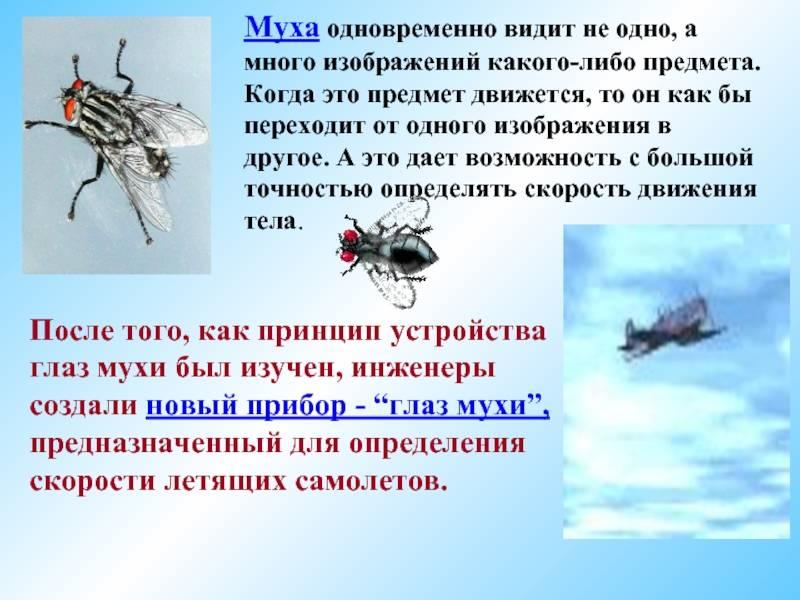 Скорость полета мухи