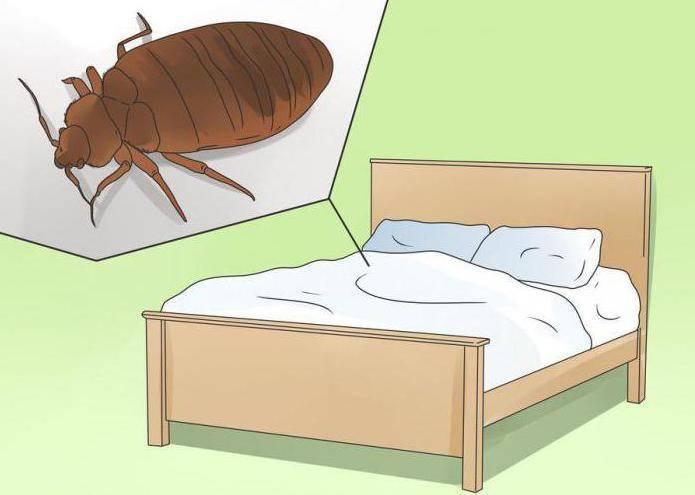8 мест где прячутся постельные клопы, как найти и уничтожить их гнездо